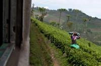 tea_worker